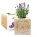 Ecocube Blumenrahmen Lavendel