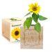 Ecocube Blumenrahmen Sonnenblume