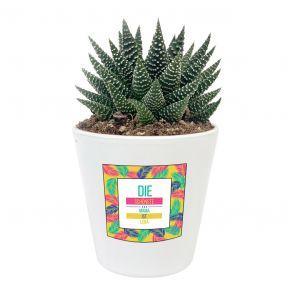Sukkulente Haworthia mit personalisiertem Etikett Palmendesign