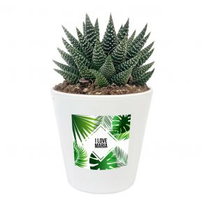 Pflanze Haworthia mit personalisiertem Etikett Summertime