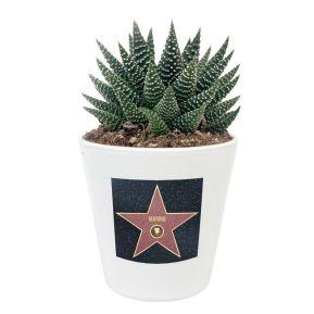 Pflanze Sukkulente mit personalisiertem Etikett Walk-of-Fame-Stern