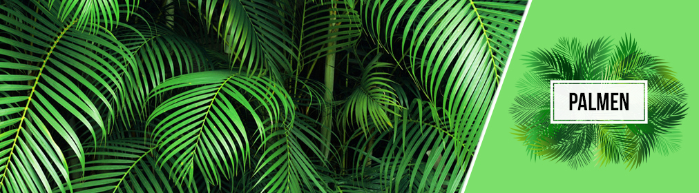 Kollektion Palmen