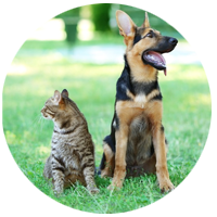 Graviere Accessoires für Haustiere