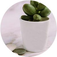 Pflanzen mit Personalisierung